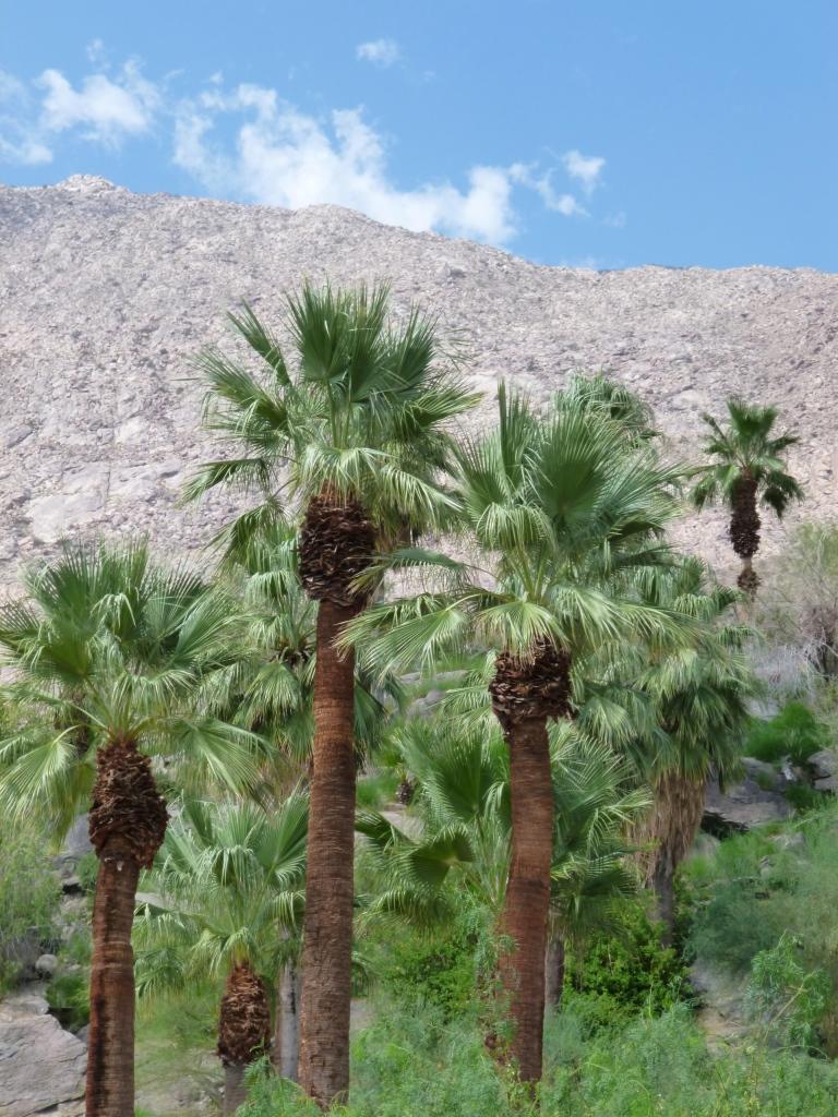 Thousand Palms Oasis Preserve, California